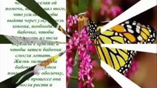 Притча - Урок бабочки