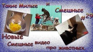 Новые смешные видео про животных. Такие Милые и Смешные #29