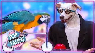 MOST INCREDIBLE ANIMAL Auditions On Got Talent 2021!   Top Talent