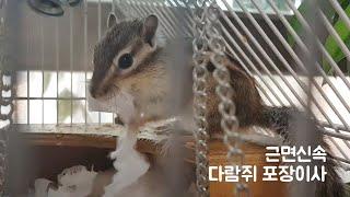 다람쥐 포장이사합니다