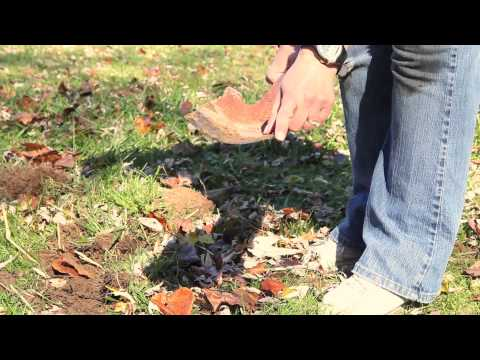 How to Remove Grass to Prepare to Plant a Vegetable Garden : Gardening Techniques