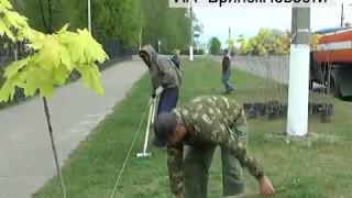 Кленовую аллею заложили сегодня в Новозыбкове