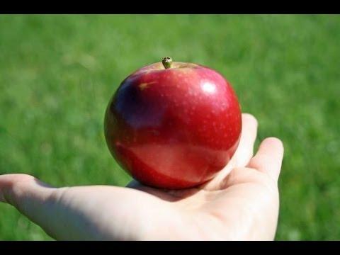 Les bienfaits de manger les pommes pour votre santé.