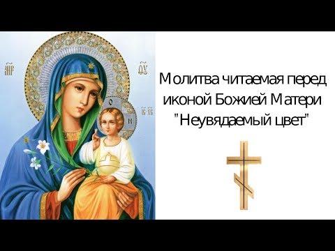 """Молитва  о замужестве и личной жизни  иконе """"Неувядаемый Цвет"""" Божьей Матери"""