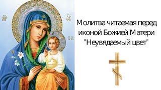 """Молитва  о замужестве иконе """"Неувядаемый Цвет"""" Божьей Матери"""