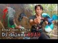 Burung Tengkek Udang Dalam Lubang Tanah  Mp3 - Mp4 Download