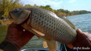 Хорошая рыбалка - но не для всех .Река Дон . 26 сентября  2020 .