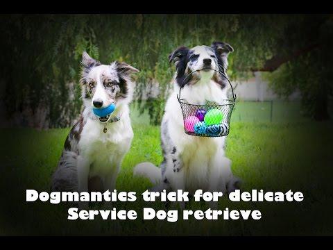 Teach a delicate retrieve using this trick ! - Dog training - YouTube