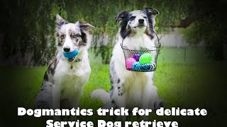 Teach a delicate retrieve using this trick ! - Dog training