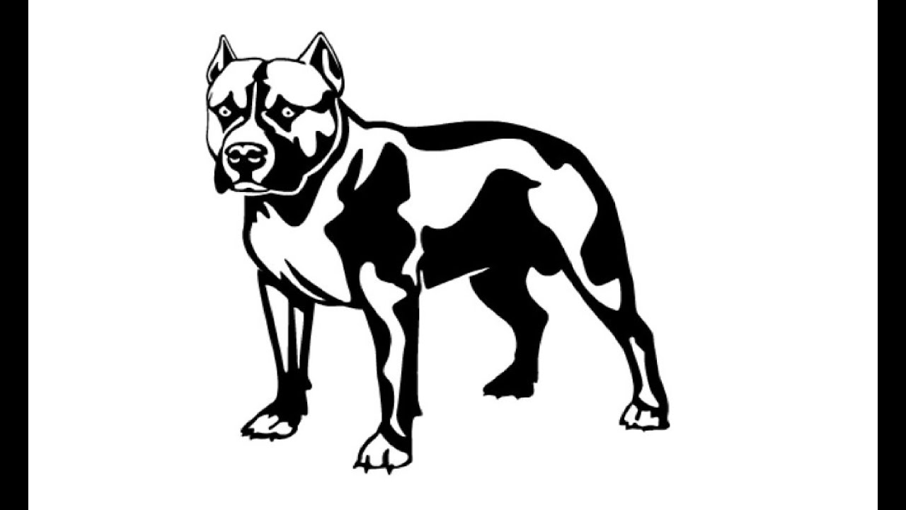 Uncategorized How To Draw Pitbulls how to draw a pit bull youtube d