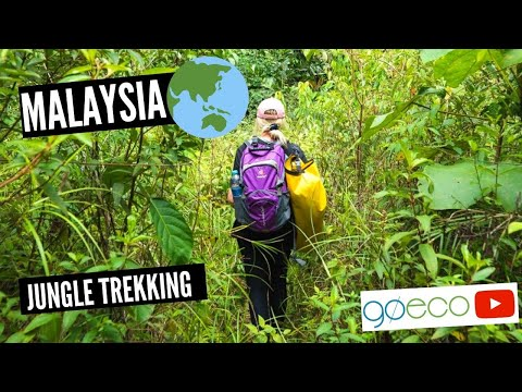 Jungle Trekking in Malaysia   GoEco