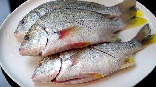 潮汕海鱼煲,鲜香味美又营养,味道特别赞【我是马小坏】