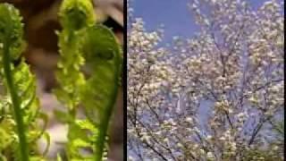Four Seasons of Vermont