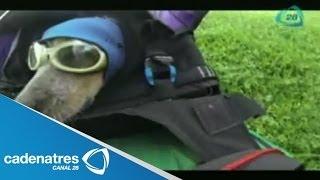 Hombre se lanza en paracaídas acompañado de su perro