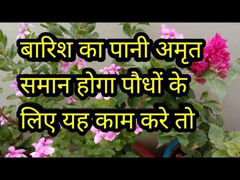 बारिश-का-पानी-अमृत-समान-होगा-पौधों-के-लिए-अगर-यह-काम-करें-तो,-plants-care-in-rainy-season