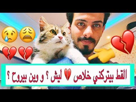 يوم الوداع 😢💔 قطي المميز بيتركني 😢 وبيروح لشخص ثاني ليش ؟ 😣 اساسيات القطط الجديده / Mohamed Vlog