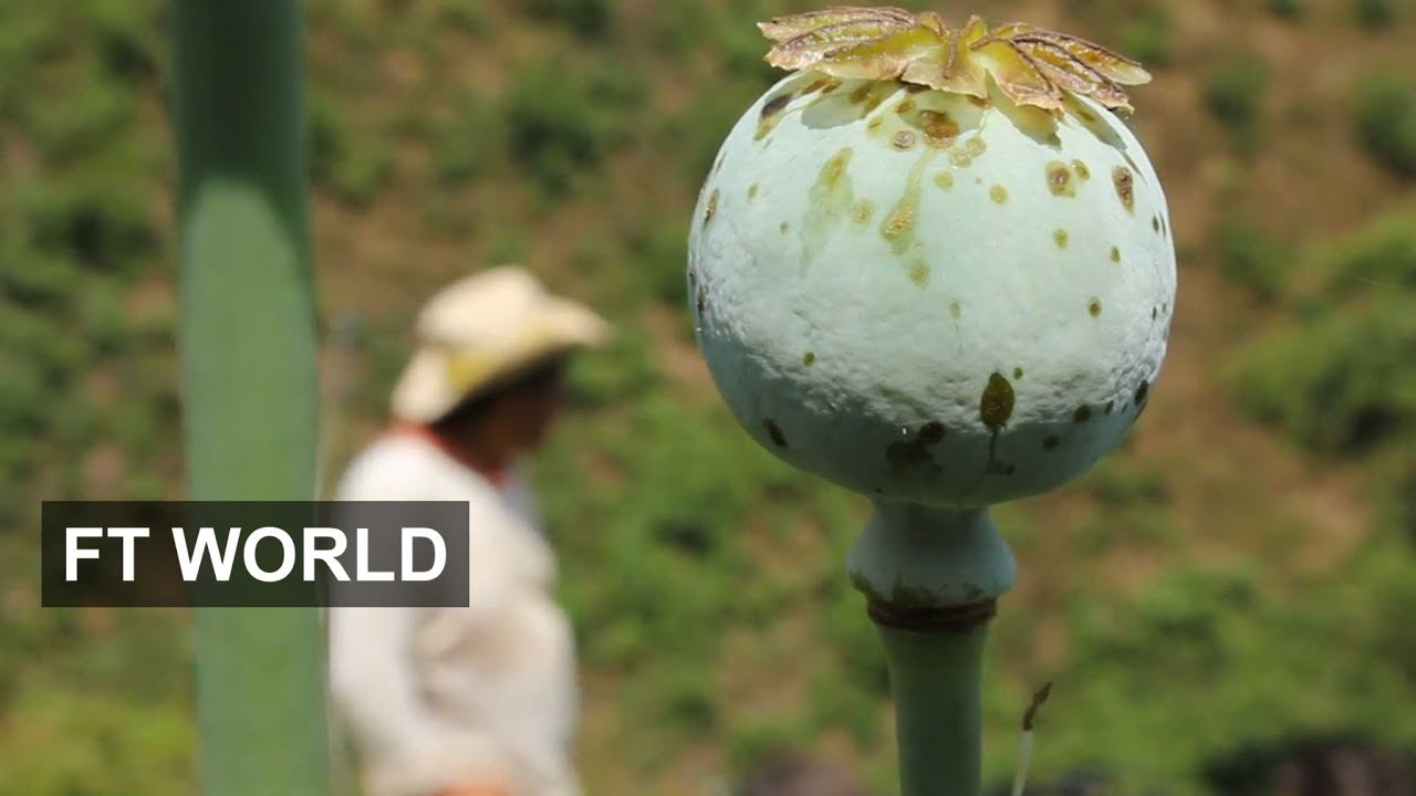 Risky Life Of Mexican Poppy Farmers Ft World Youtube