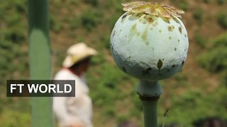 Risky Life Of Mexican Poppy Farmers | FT World