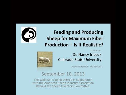 Feeding Sheep for Fiber Production (5)