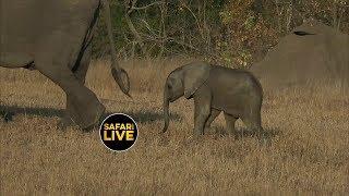 safariLIVE - Sunset Safari - June 25, 2019
