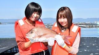 """愛媛県の宇和海で育った新たなブランド鯛""""歌吉""""の美しさや美味しさのヒ..."""