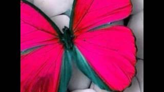 ##ผีเสื้อใจร้ายกับดอกไม้ใจอ่อน - เอิ้นขวัญ วรัญญา