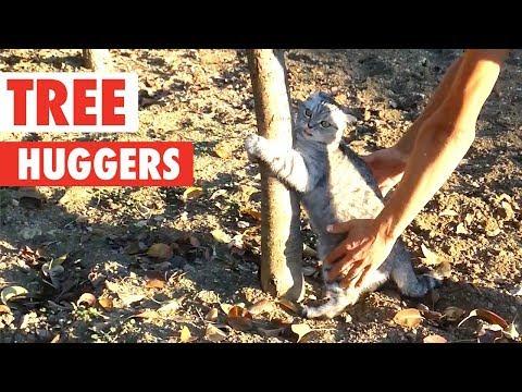 Tree Huggers   Funny Pet Compilation 2018