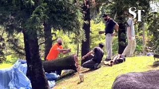 Woman killed by falling tree: NParks personnel investigating fallen tree in Marsiling Park