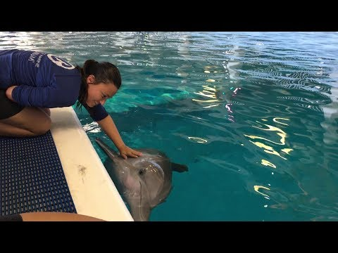 Hurricane Irma Update from Clearwater Marine Aquarium