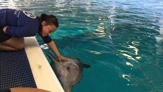 Hurricane Irma Update from Clearwater Marine Aquarium