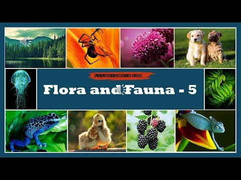 Lilquizwhiz   Flora and Fauna - 5   Fun Quiz   Quiz for kids   Olympiads & Competitive Exams Prep
