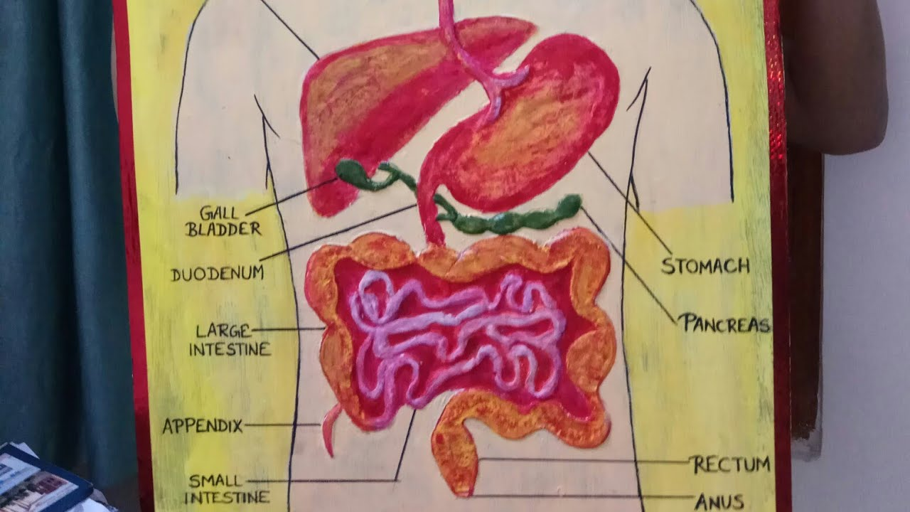 endocrine system project ideas