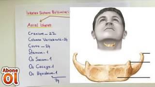ANATOMİ-6.KONU-Kemik Tipleri Ve İskelet Sistemi Bölümleri