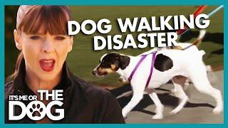 Walking The Dog Without Doggy Drama