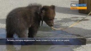 Медвежонок купается в луже и поет песни своей игрушке
