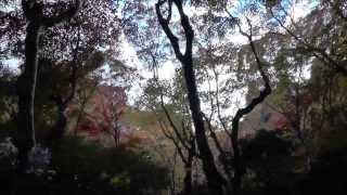 祇王寺 その2 門 京都の紅葉名所 Giou-ji Temple autumn leaves attractions in Kyoto part.2 高岡智照 検索動画 3