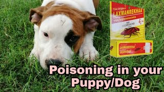 लक्ष्मणरेखा चॉक poisoning Side effects & treatment in Hindi#Doguniquecafe