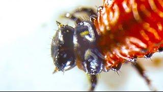 Blutkörperchen im Auge unter dem Mikroskop