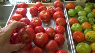 GREEN TOMATOES EASIEST WAY TO RIPEN FAST (OAG 2016)