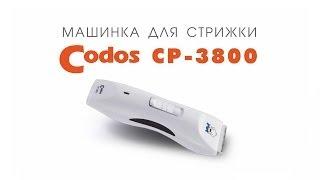 Codos CP-3800 машинка для стрижки шерсти животных (собак, кошек, кроликов)