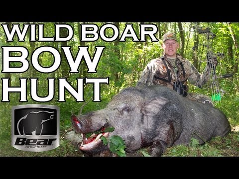 Bowhunting Giant Wild Boar in Hungary - YouTube Giant Wild Boar Photos