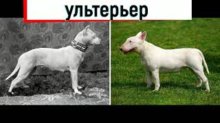 Как изменились породы собак за последние 100 лет