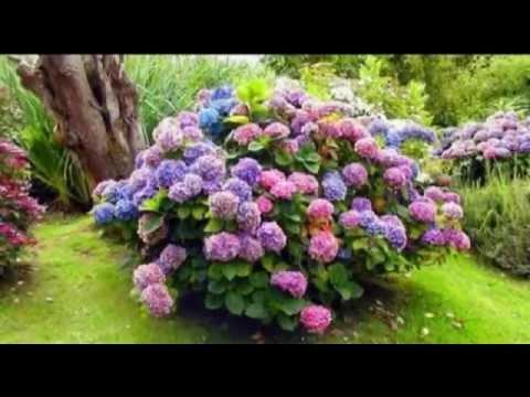 фото цветов лекарственных трав