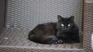 Happy National Black Cat Day