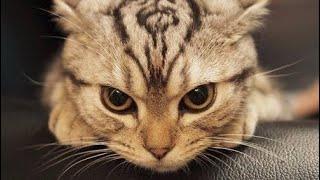 Что чувствует кошка когда её обижают? Что может обидеть кошку?