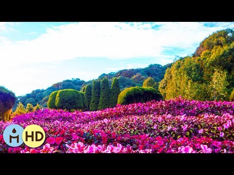 Music Zen Relaxation Nature: 528Hz Miracle Frequency, Nature Meditation, Calm Music Background ❈803