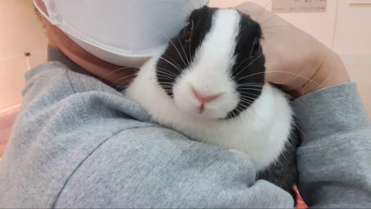 애완 토끼 미용실? 어렵지 않아요! 전문가와 상담하세요ㅋ반려 동물 키우기
