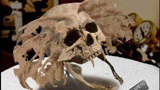 Odnaleziono czaszki hybryd ludzi ze zwierzętami?