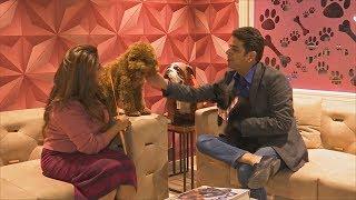 Первый роскошный отель для собак в Индии набирает популярность (новости)