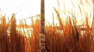 Chasse aux canards camargue septembre 2013 drift hd n°1  DUCK HUNTING